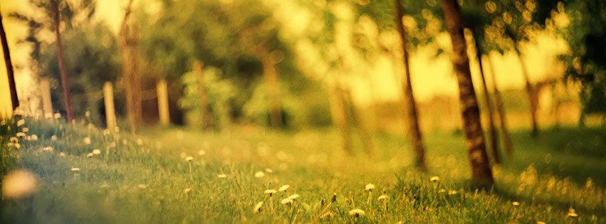 couverture facebook, facebook cover, foret, nature, calme, quietude, zen