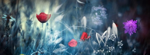 facebook, couverture, cover, flowers, fleurs