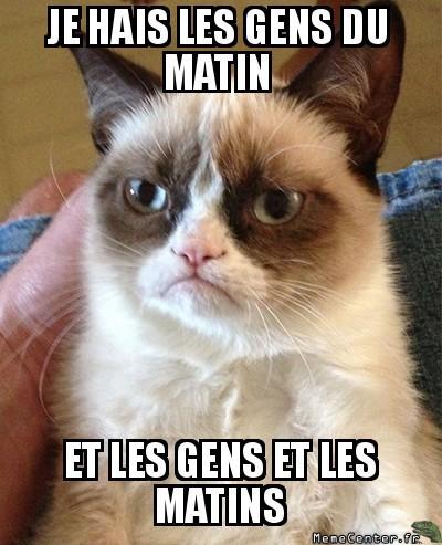 meme, grumpy cat, chat, je hais les gens du matin, et les gens et les matins